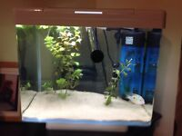 Fish tank 30l good condition with filter already to go