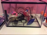 Fish Tank & Accessories For Sale