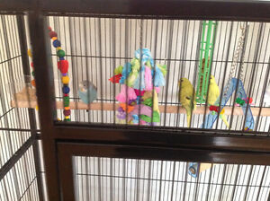 Beautiful bird cage with 4 birds