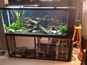 150 gallon custom Starphire glass with polished corners