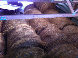Hay Bales for Sale -- Alfalfa and Timothy