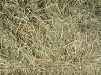 Square horse hay bales-100 available