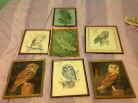 COLLECTION OF FRAMED OWL PICTURES / PHOTOS.