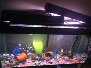 30 gallon fish tank!