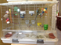A Pair Of English Budgies, Cage & Accessories For Sale