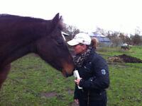 Horses - Training