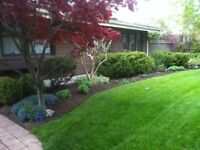 We are looking to help you by making your yard look nice