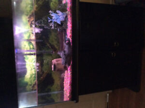 Fish tank with two fish, algae and accessories