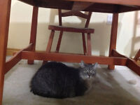Two Great Cats need a new home