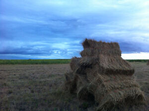 2016 Small Square Hay Bales for sale