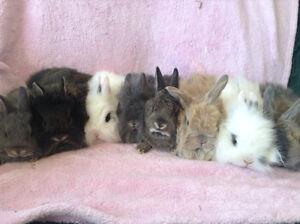 Christians Heavenly Hares rabbitry  (Facebook)