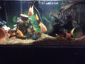 Complete Fish Tank Set Up