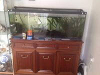 Fish with fish tank (reserved pending collection)