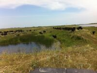 Cattle??? Need Pasture??? Full infrastructure Central Sk.
