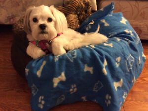 PET SITTING SERVICES in MY HOME in QUISPAMSIS