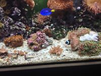 Saltwater system for sale..fish and corals go first