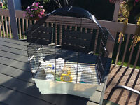 Canary small bird cage with food included