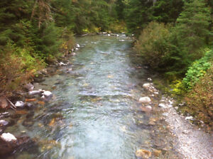 plaser claim on ferguson creek by trout lake Revelstoke British Columbia image 4