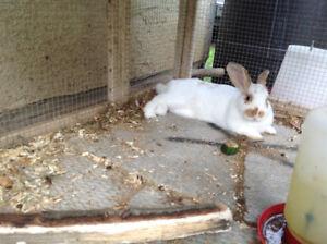 Adorable, friendly Bunny