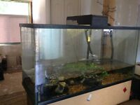100 gallon fish tank with fluval fx5 cannister filter