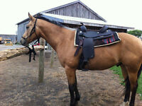 English and Western Saddle packages OBO