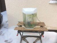 Complete hexagonal tropical aquarium fish tank set up