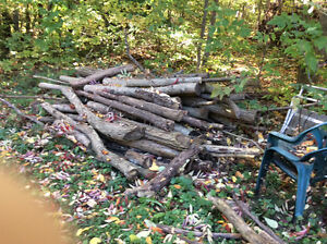 FIRE WOOD for sale Peterborough Peterborough Area image 2