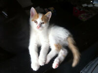 URGENT**2 young cats to good home!