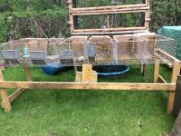 Lots of cages for sale
