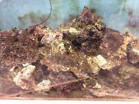 Live rock for marine fish tank