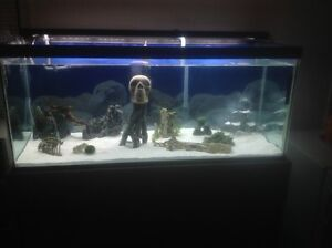 80 Gallon Fish Tank & Stand Campbell River Comox Valley Area image 2