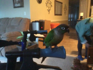 Looking for extra friendly birds for therapy use.