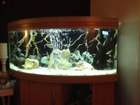 """40"""" Bow Fronted Fishtank"""