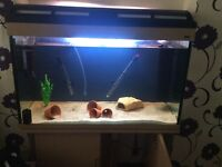 Ready to use fish tank and stand