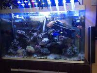 Fluval Osaka 4 ft 220 litre tank ,cabinet,deltec protein skimmer. Wave maker,fansx2 heater and pump