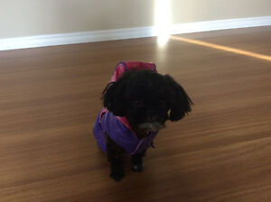 Elf costume and purple rain coat for a puppy or dog under 5 lbs