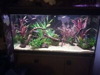 Giving away any tropical fish?