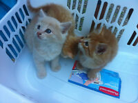 Male kittens free to loving homes