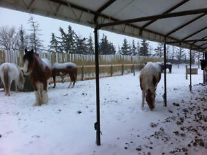 Horse Stabling and Care