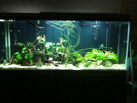 260+ gallon aquarium