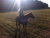 Safe, quiet large pony gelding for part board