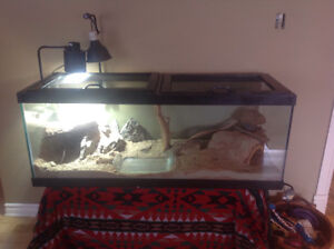 Reptile tank ( great for bearded dragon)