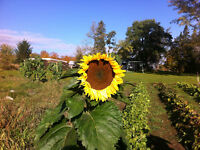 ► Community Supported Agriculture ► CSA Shares Available