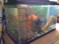 Fish tank, 5 fish and accessories for sale
