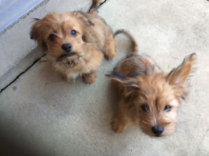 Puppies need a home