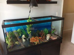 Fish Turtle Reptile Amphibian Aquarium - start up kit offer!