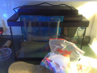 Free 10 gallon aquarium