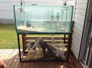 90 gallon salt water fish tank with 20 gallon sump. Complete