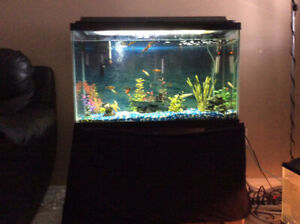 30 Gallon tank with fish and accessories