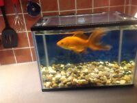 Tank and large fish